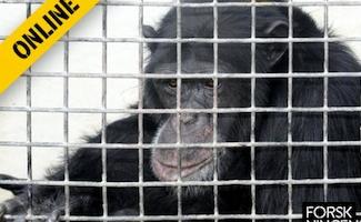 Forskningens Døgn - Zoologisk Have optrævler sortbørs for truede dyr med dna fra et enkelt